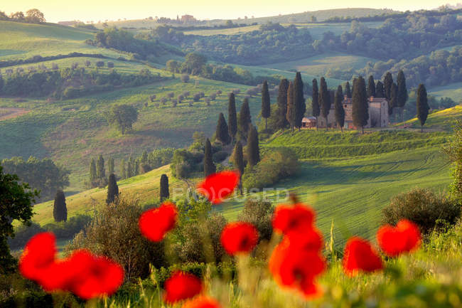 Orcia valley in spring — Stock Photo