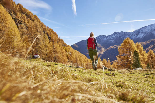Woman hiking, rear view, Schnalstal, South Tyrol, Italy — Stock Photo