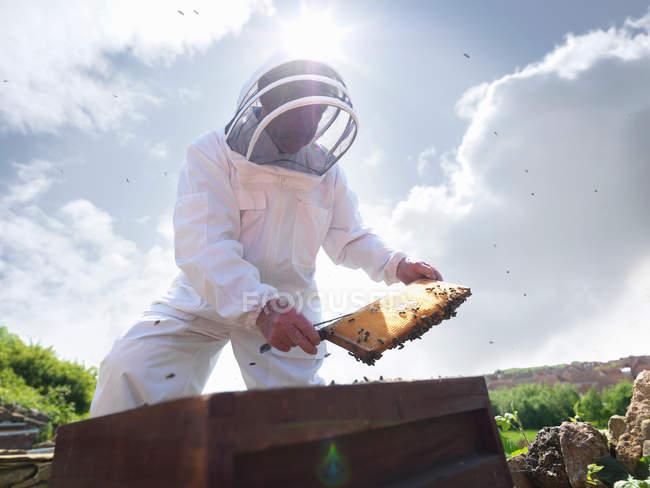 Beekeeper inspects honey comb — Stock Photo