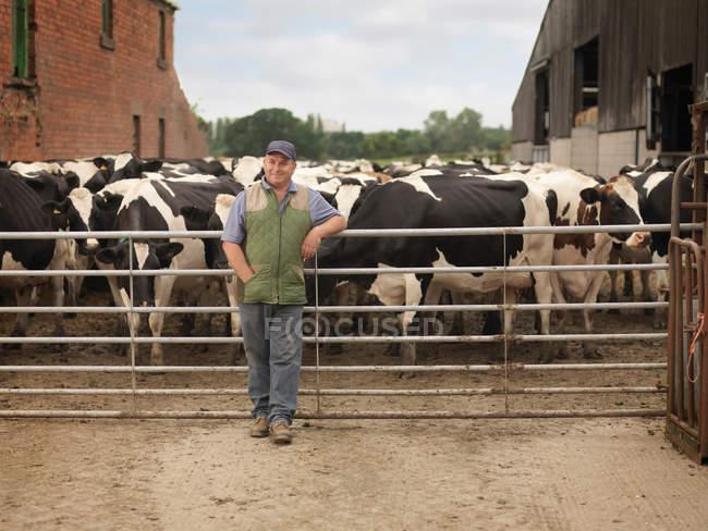 Agricoltore in piedi vicino a mucche — Foto stock