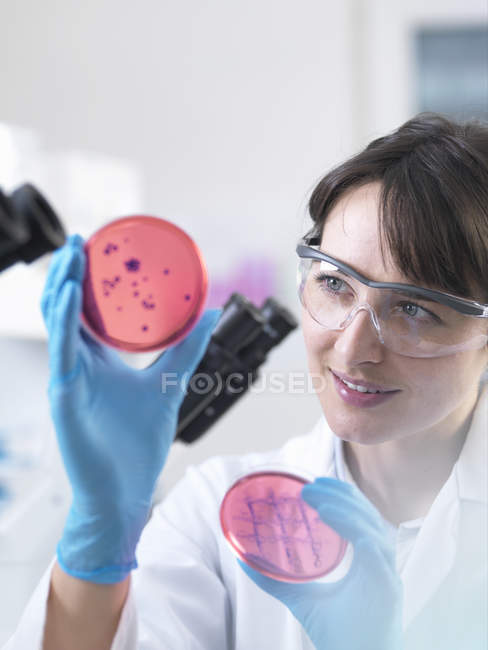 Scientist examining petri dish containing bacterial culture grown in laboratory — Stock Photo