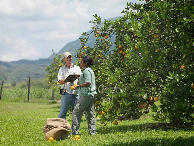 Workers With Clipboard In Orange Groves — Stock Photo