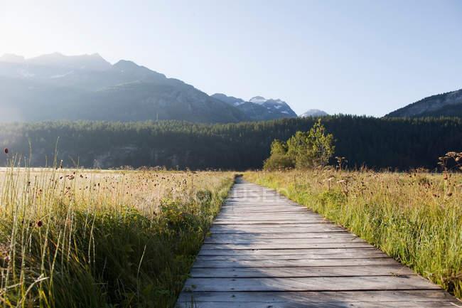 Деревянный путь через зеленую траву — стоковое фото
