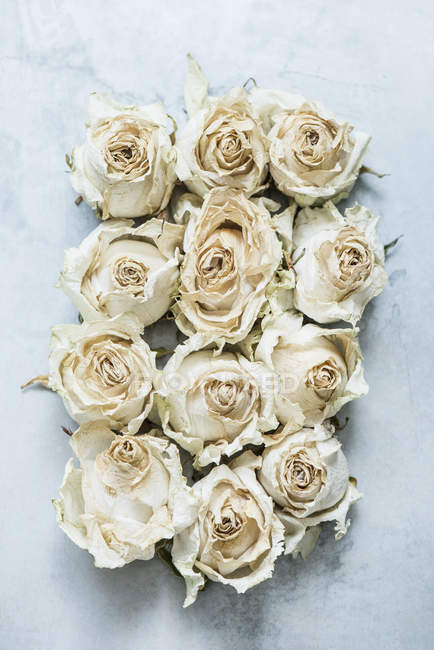 Dried rose heads, top view — Stock Photo