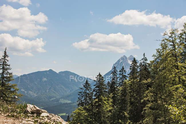 Trees overlooking rocky mountains — Stock Photo