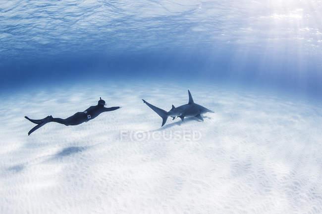 Natation de plongeur avec le grand requin de Hammerhead, vue sous-marine — Photo de stock