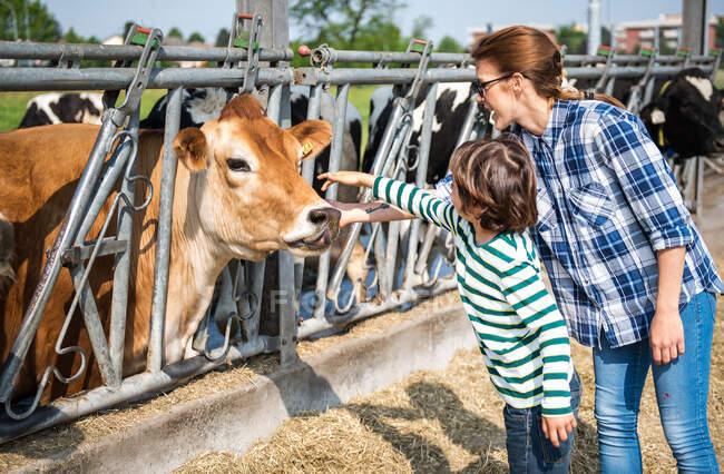 Female farmer and boy petting cow on organic dairy farm — Stock Photo