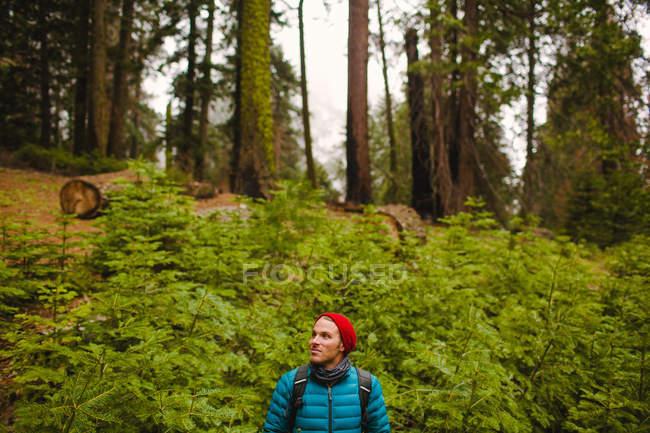 Caminhante no Parque Nacional Sequoia, Califórnia, EUA — Fotografia de Stock