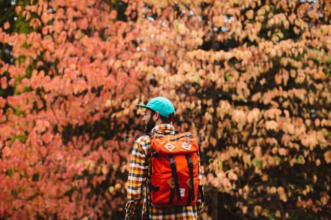 Junger Mann in ländlicher Umgebung, mit Rucksack, Rückansicht — Stockfoto