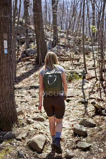 Visão traseira da mulher caminhante caminhadas na floresta, Harriman State Park, New York State, EUA — Fotografia de Stock