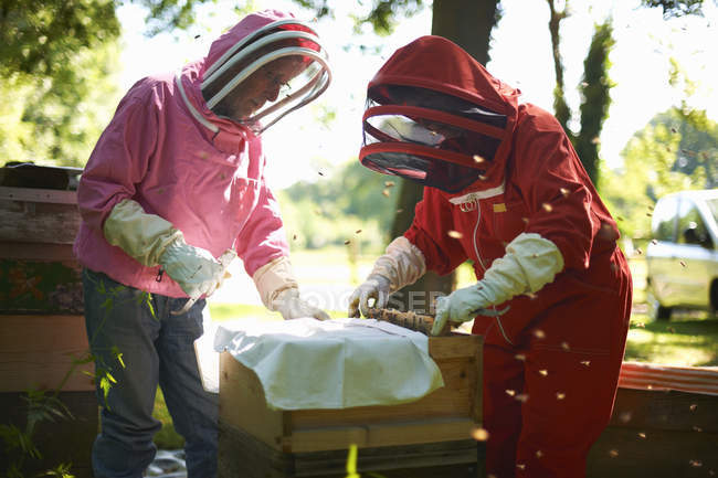 Two beekeepers lifting frame from bee hive — Stock Photo