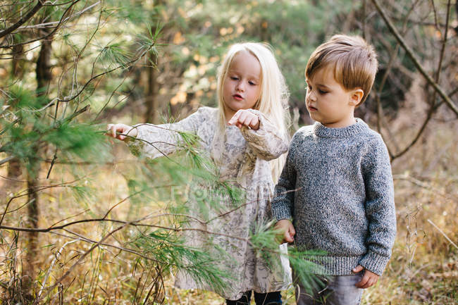 Siblings looking and pointing at tree in forest — Stock Photo