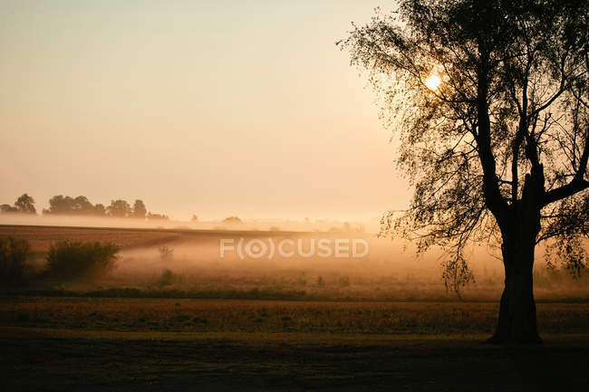 Mist over pastures at sunrise — Stock Photo