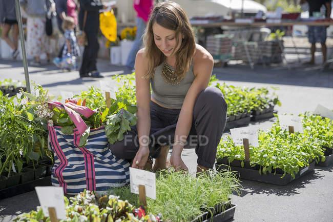 Mujer en establo de frutas y verduras seleccionando plantas de hierbas - foto de stock