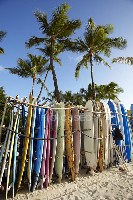 Row of surfboards on sandy beach with tall palms — Stock Photo