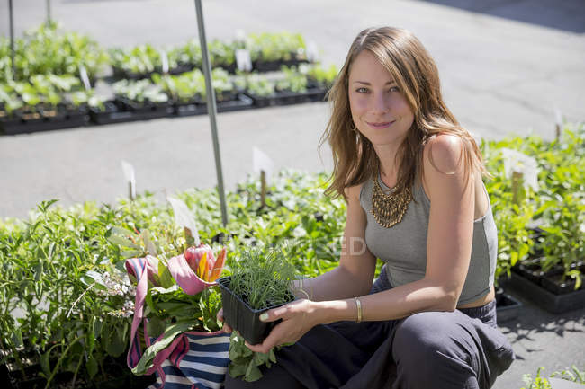 Mujer en establo de frutas y verduras sosteniendo plantas de hierbas - foto de stock