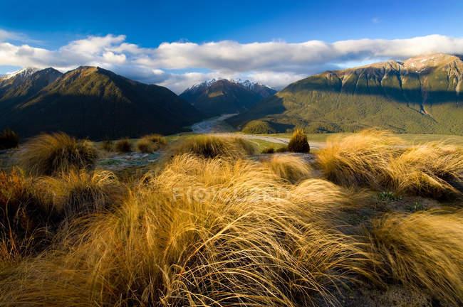 Grama alta com montanhas — Fotografia de Stock