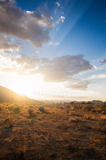 Sun lighted Joshua Tree National Park, California, USA — Stock Photo