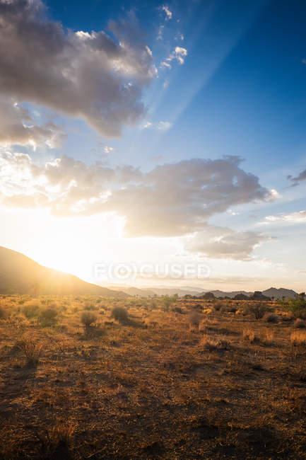 Sole illuminato Joshua Tree National Park, California, Stati Uniti d'America — Foto stock