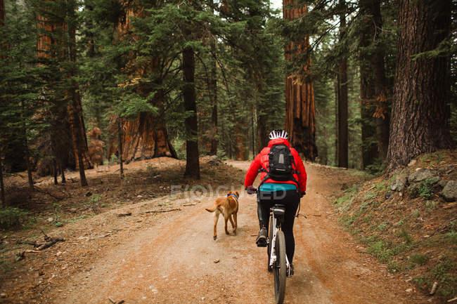 Hund läuft neben Radfahrer, Mammutbaum-Nationalpark, Kalifornien, USA — Stockfoto