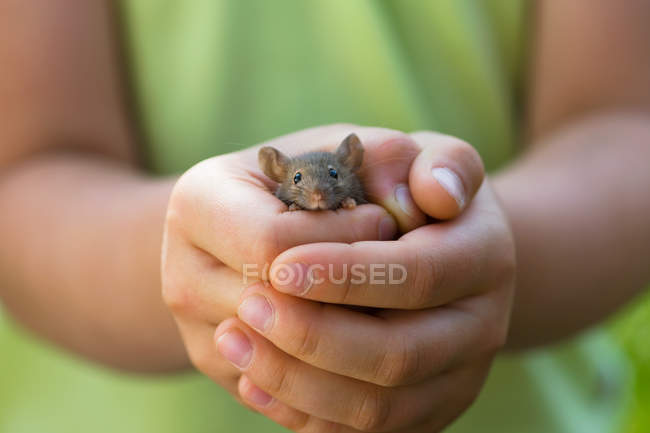 Little girl holding gray mouse in hands — Stock Photo