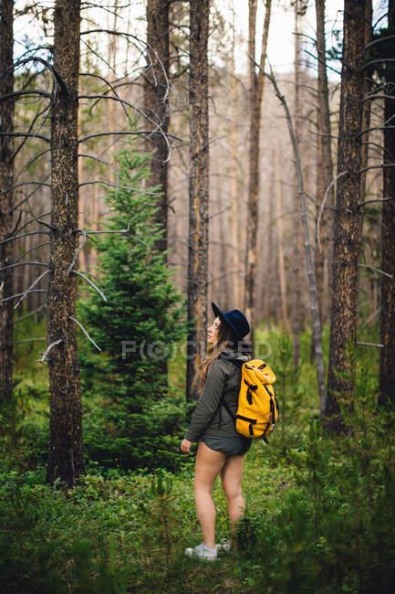 Donna nella foresta guardando altrove, Rocky Mountain National Park, Colorado, USA — Foto stock