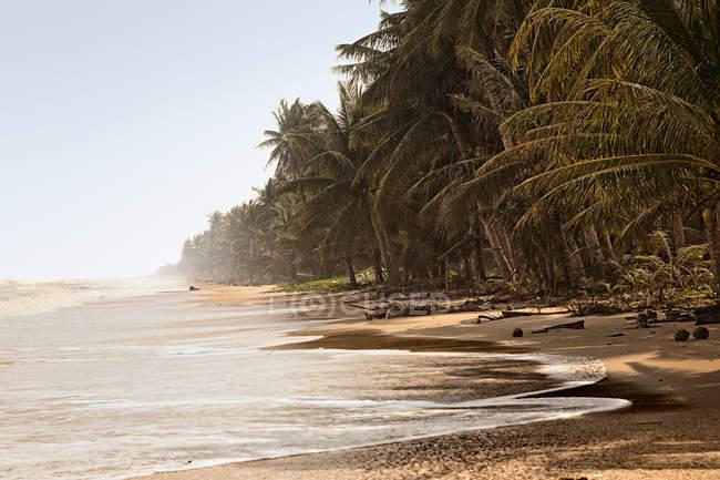 Surf praia tropical — Fotografia de Stock
