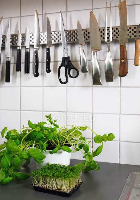 Herbs and utensils in kitchen — Stock Photo