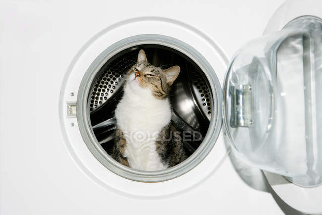 Cat in washing machine — Stock Photo