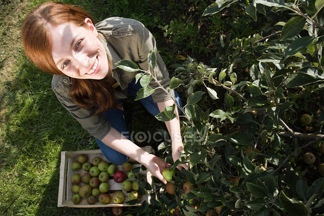 Young woman picking fresh apples — Stock Photo