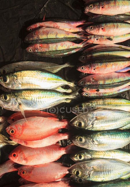 Fresh fishes for sale — Stock Photo