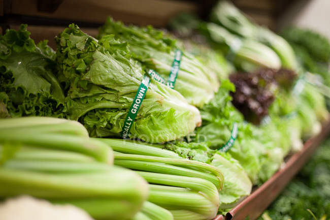 Row of green salad vegetables on shelf — Stock Photo