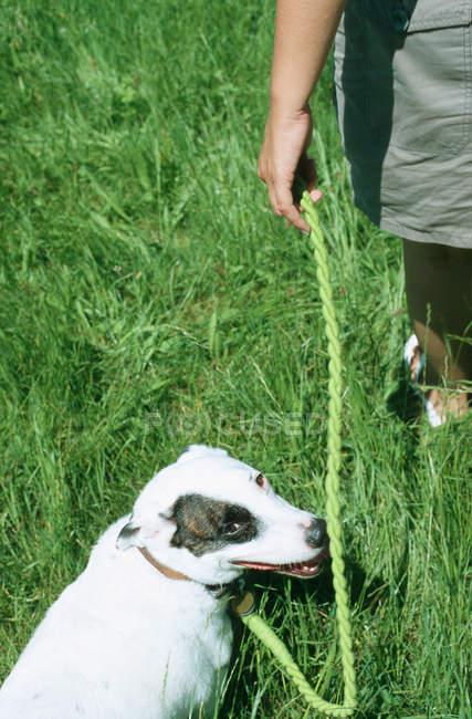 Cropped image de femme qui marche dans domaine avec chien — Photo de stock