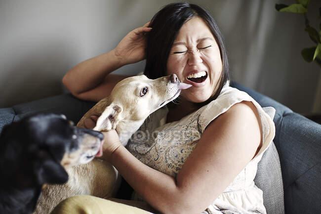 Mulher adulta média puxando um rosto enquanto está sendo lambeu por cães no sofá — Fotografia de Stock