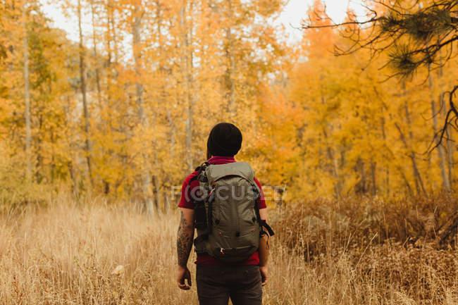 Rückansicht männlicher Wanderer beim Wandern im Herbstwald, Mineralienkönig, Mammutbaum-Nationalpark, Kalifornien, USA — Stockfoto