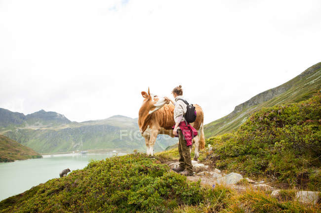 Woman stroking a cow, Alps, Tirol, Austria — Stock Photo