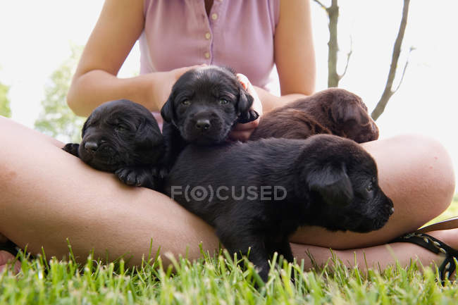Cropped image d'adolescente maintenant chiots sur herbe — Photo de stock