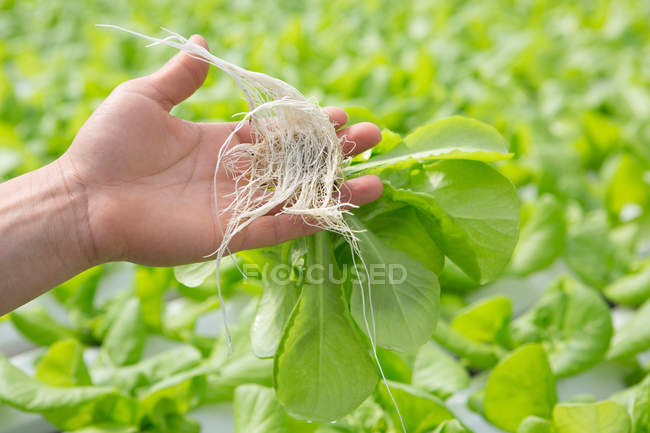 Child holding plants with roots, close-up partial view — Stock Photo