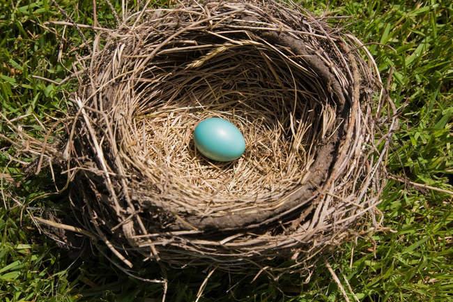Висока кут зору яйце в гніздо — стокове фото