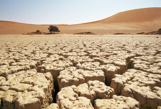 Solo rachado no deserto — Fotografia de Stock