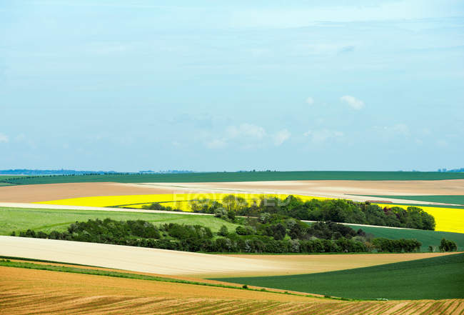 Trees and crops under blue sky — Stock Photo