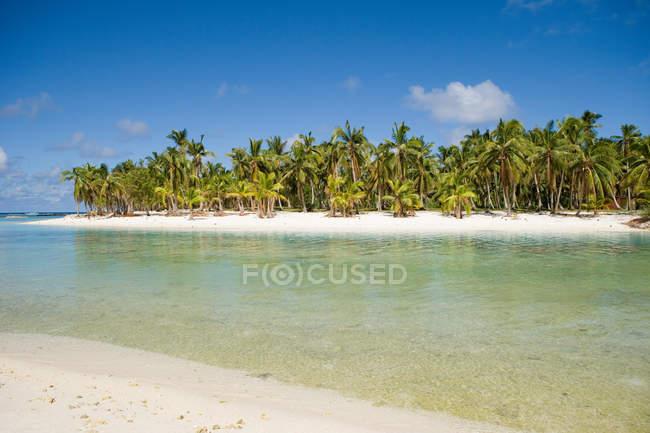Playa con palmeras - foto de stock