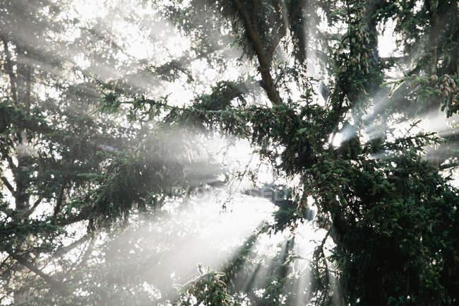 Vista inferior de árvores ramos na floresta com retroiluminação — Fotografia de Stock