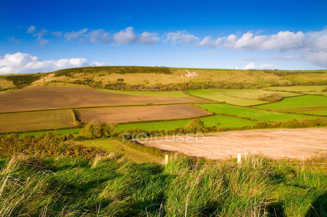Green fields and blue sky in bright sunlight — Stock Photo