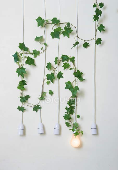 Ampoules avec lierre contre mur blanc — Photo de stock