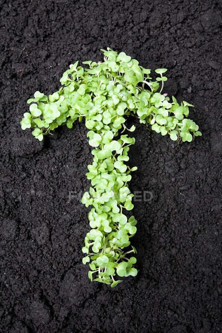 Folhas em forma de seta — Fotografia de Stock