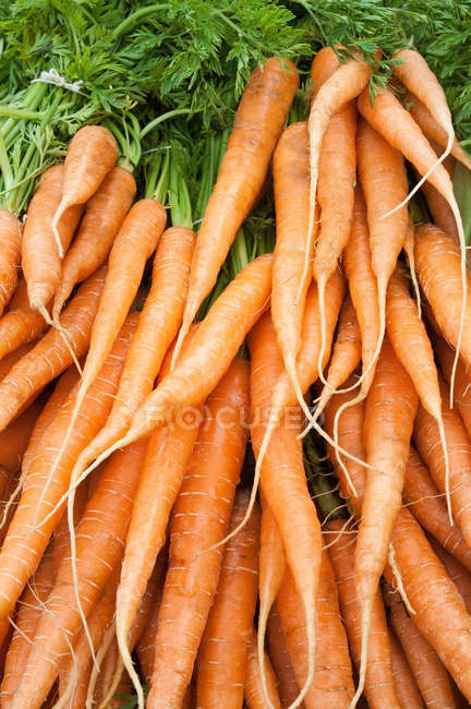 Ripe yellow uncooked carrots — Stock Photo