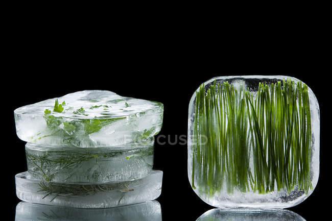 Erbe congelate in cubetti di ghiaccio — Foto stock