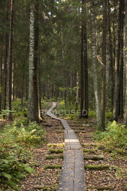 Wooden pathway stretching through forest — Stock Photo