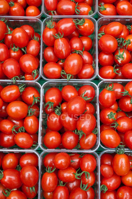 Plum tomatoes in containers — Stock Photo